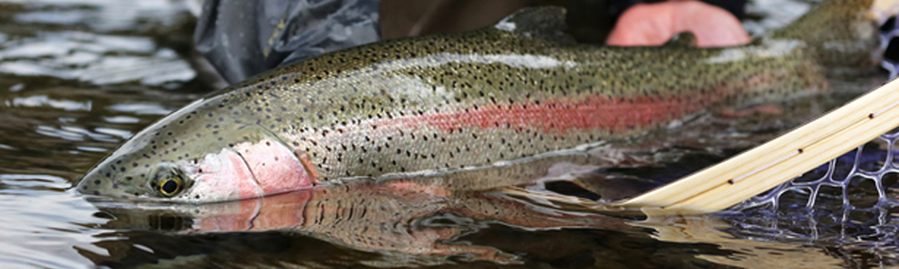 Mossroddich Trout Loch Opening Times